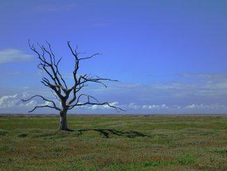 fao-resiliciencia-cambio-climatico