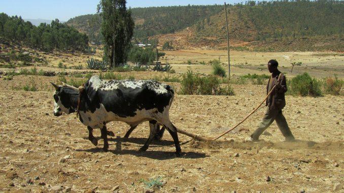 sequía-recursos-etiopia-violencia