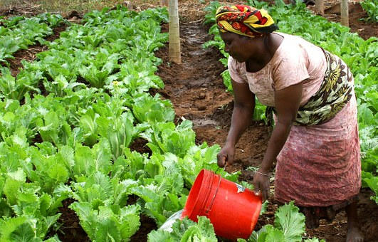 agricultura-africa