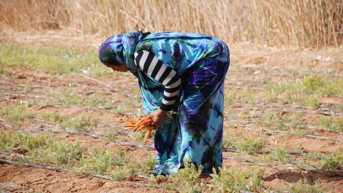 ayudas-navarra-pueblo-saharaui