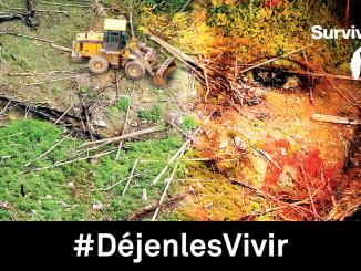 indígenas-campaña-déjenles-vivir-survival