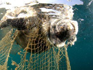 El plástico y las redes abundan en el mar