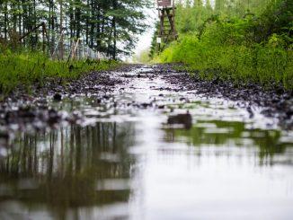 bosques-desplazados-fao-acnur