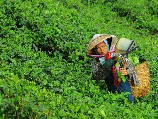 importación alimentos-crecimiento-poblacion