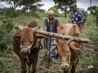 Resiliencia cambio climático