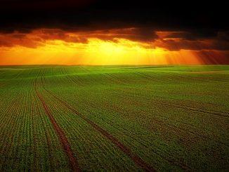 niños trabajadores agricultura americana