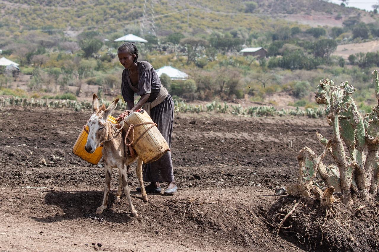 Mejoras en agricultura como forma de conseguir el hambre zero