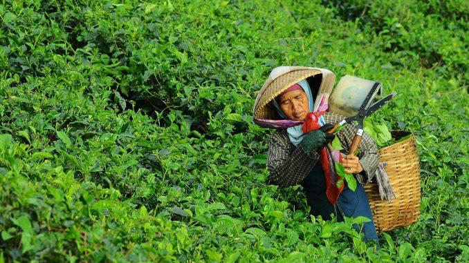 feminismos mujeres rurales