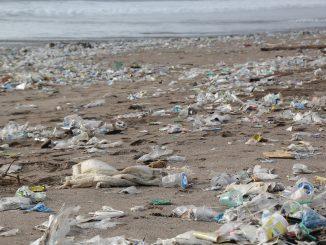 El festival Mirant tratará en su tercera edición la problemática medioambiental
